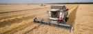 Russia Harvest Update for the Week 32, Farmers Harvested 68.8 million tons