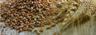 Volga Baikal AGRO NEWS Update on the Situation on the Russian Grain Market Development from 3 to 7 August 2020