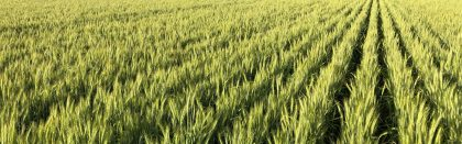 Volga Baikal AGRO News Update on Russian Agriculture Future Wheat Demand – Analysts Predict Growth in Russian Wheat Export !!!