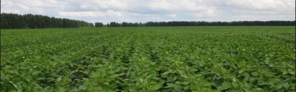 Volga Baikal AGRO News Update on Soybean Price Development in Russia !!!