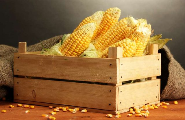 Volga Baikal AGRO NEWS Update on the Global Corn Market !!!