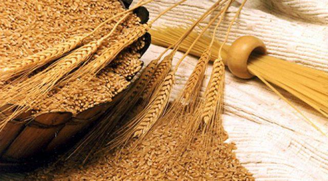 Volga Baikal AGRO NEWS Update on Russian Agriculture – Genetic Durum Wheat Variety Development !!!