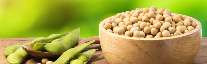 Volga Baikal AGRO NEWS Update on the Soybean Trading !!!