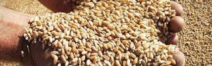 Volga Baikal AGRO NEWS Update on the Grain Export from Russia !!!
