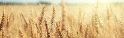 Volga Baikal AGRO NEWS Update on Russian Grain Export Quota !!!