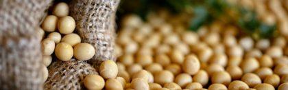 Volga Baikal AGRO NEWS Update on Soybean Export !!!