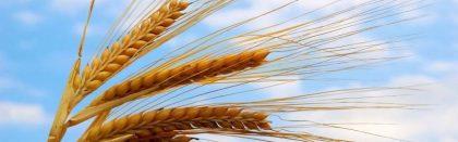 Volga Baikal AGRO NEWS Update on the Russian Wheat Exports !!!