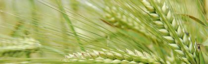 Volga Baikal AGRO NEWS Update on the Barley Growth Prospects in 2021 !!!
