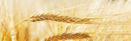 Volga Baikal AGRO NEWS Update on Barley Export !!!