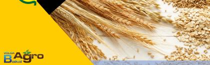 Volga Baikal AGRO NEWS Update on the Russian Grain Price Development !!!