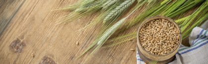 Volga Baikal AGRO NEWS Update on the Latest Barley Research !!!