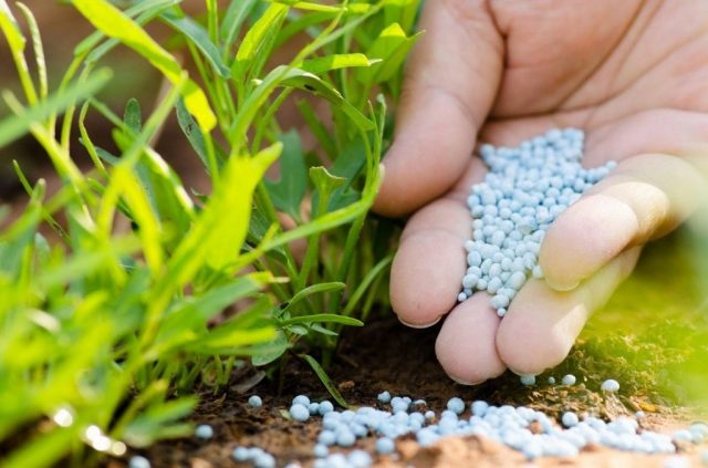 Volga Baikal AGRO NEWS Update on the Mineral Fertilizers !!!