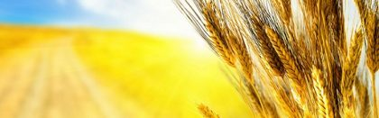 Volga Baikal AGRO NEWS Update on the Development of the Russian Agricultural Sector !!!