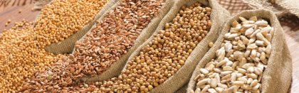 Volga Baikal AGRO NEWS Update on the Forecast for the Harvest and Exports of the Russian Wheat !!!