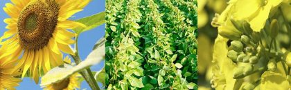 Volga Baikal AGRO News Update on the protective measures for oilseeds export !!!