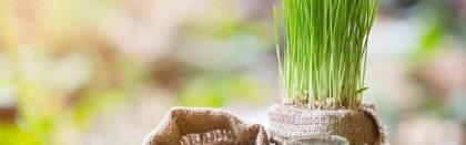 Volga Baikal AGRO NEWS Update on the Wheat Prices !!!