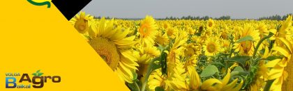 Volga Baikal AGRO NEWS Update on the Sunflower Prospects !!!
