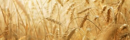 Volga Baikal AGRO NEWS Update on the Russian Grain Export !!!