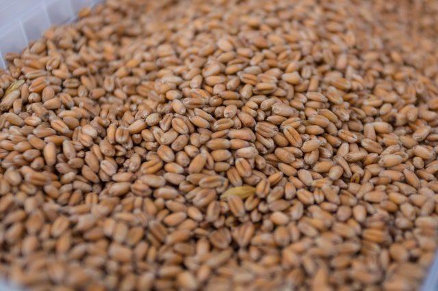 Volga Baikal AGRO NEWS Update on the Wheat Price Development !!!