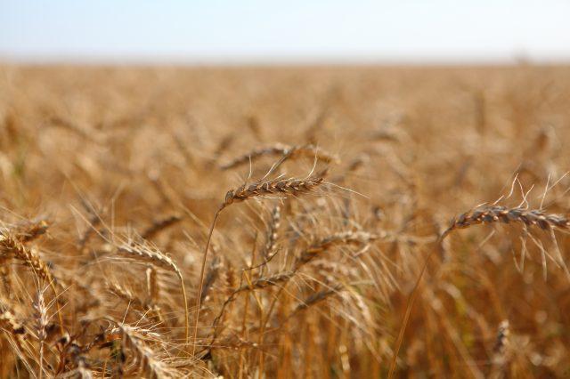 Volga Baikal AGRO NEWS Update on the Wheat Duties Situation !!!
